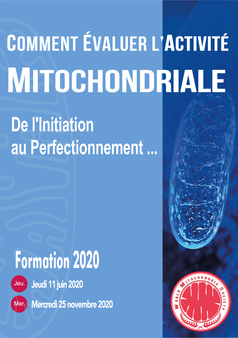 Formation-Mitochondrie-A4.jpg